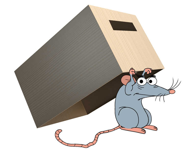 Free Bedtime Stories For Kids, Katie the Karate Kicking Kettle - Rat Carrying a Box