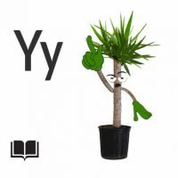 Bedtime Stories For Kids - Yousef the Yearning Yucca